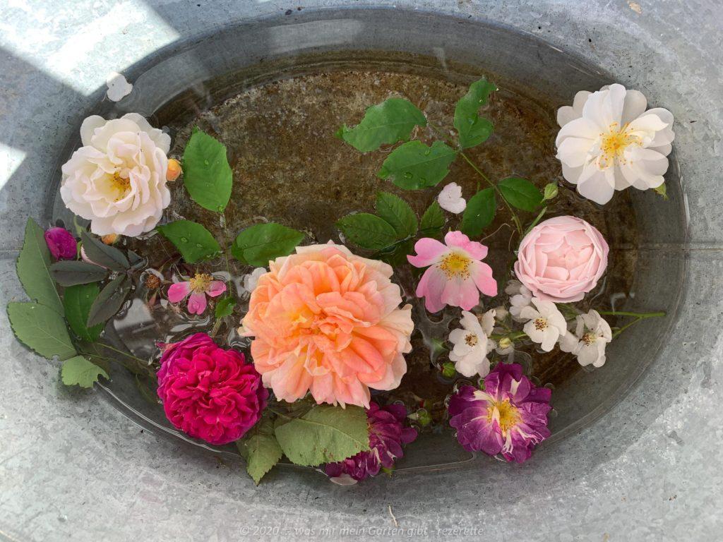 Rosenkollektion, alle in meinem Berggarten gewachsen.