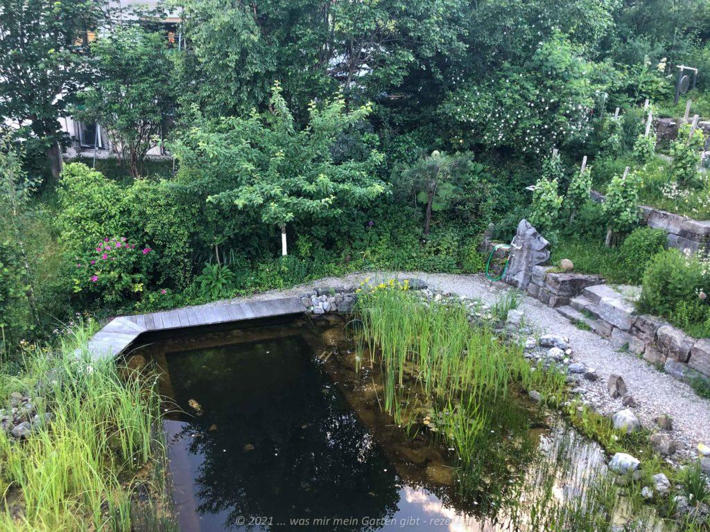Teich im Hochsommer